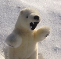 angry_polar_bear's Photo
